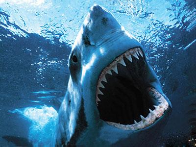 Shark Bait Ooh-Ha-Ha