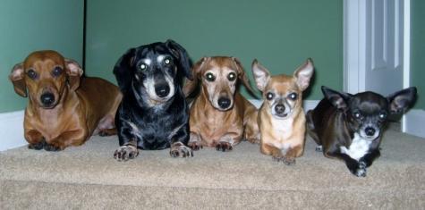 Oscar, Johnny, Frankie, Taco and Belle