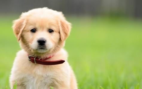 Enter Our Cutest Pet Competition!