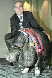 Animal Heroes- LuLu the Pot-bellied Pig