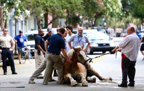 Horse-Drawn Carriage Controversy in Charleston