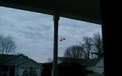 Aliens in South Carolina?