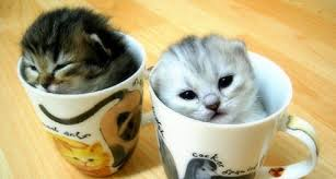 Cat Café Coming to Charleston?!