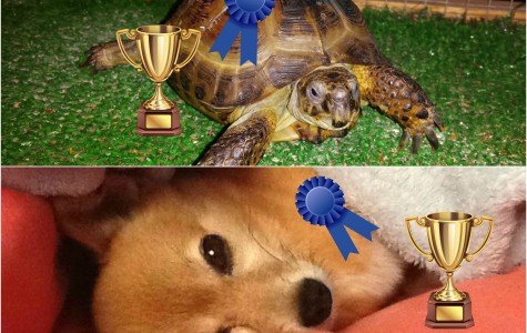 Winners Declared for Cutest Pet Contest!