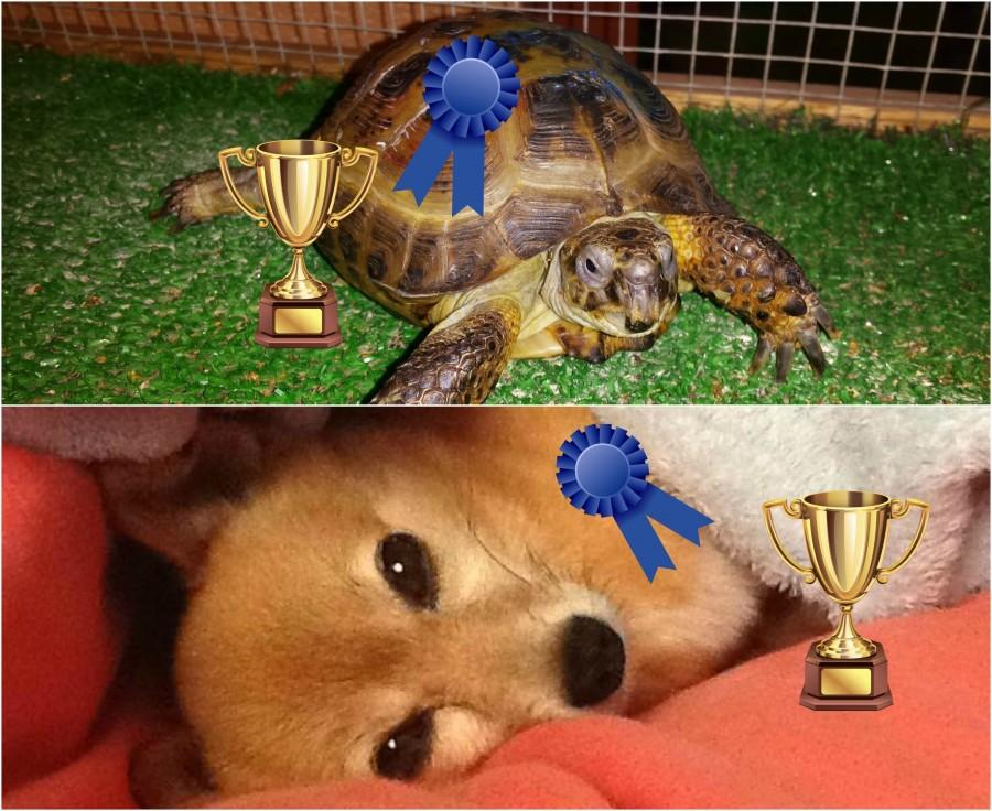 Winners+Declared+for+Cutest+Pet+Contest%21