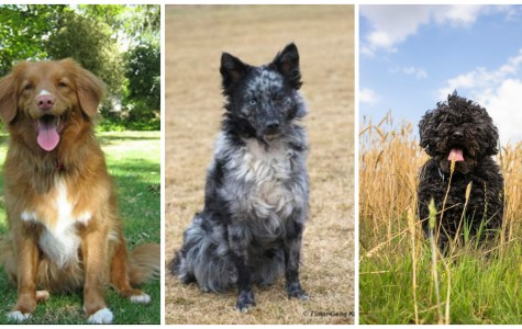 Weird Dog Breeds You Never Knew Existed