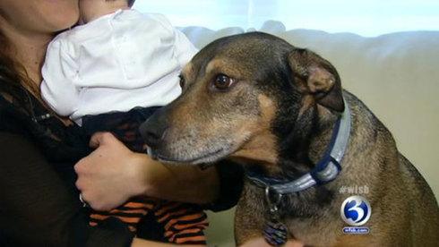 Animal Heroes- Duke the Rescue Dog