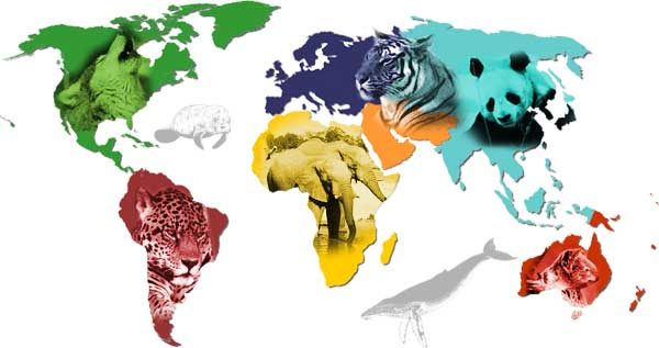 Endangered Animals Locally and Globally