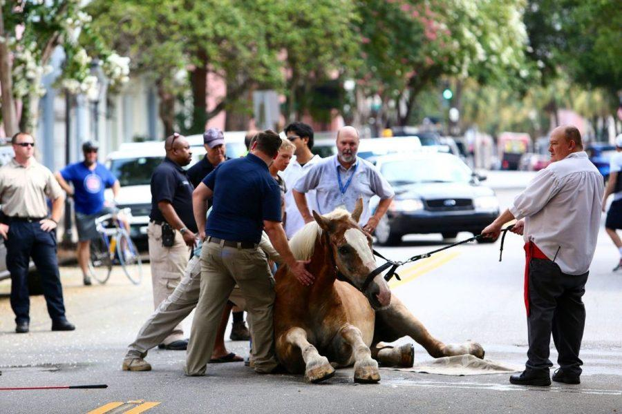 Horse-Drawn+Carriage+Controversy+in+Charleston