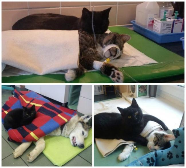 Rademenes the Recovery Cat