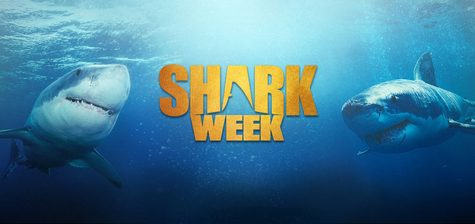 Shark Weekend Comes to Spring Break's Rescue