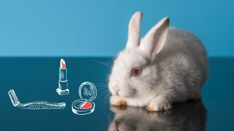 Is Your Makeup Hurting Innocent Animals? Probably...