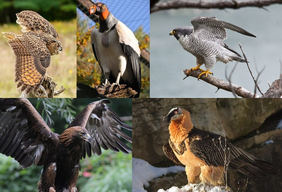 Which Raptor are You? [QUIZ]